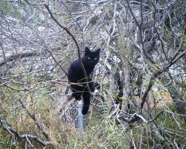 Tree Cat  January  2017  She lives in the tree and only comes down to eat.   I call her Blackie